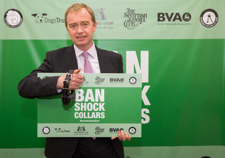 Tim at ban shock dog collar event in Parliament